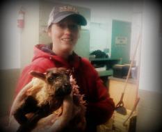 Erin and a lamb, Elgur