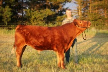 Sawyer and his fair steer