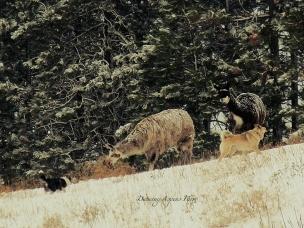 Llamas with Kletta and Gunnar