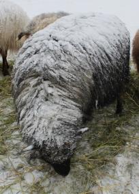 Fuzzy snowball