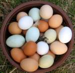 Egg Count: