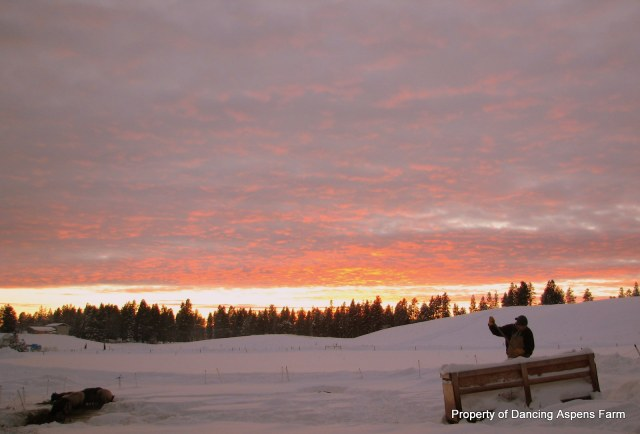 Sunset at feeding time...
