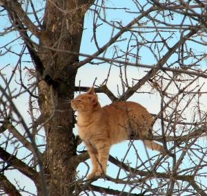 The rare Dash-bird in the tree...
