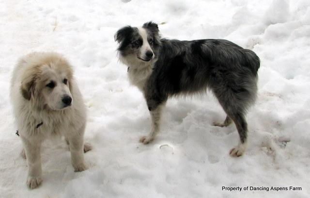 Dugur and Bellah in January
