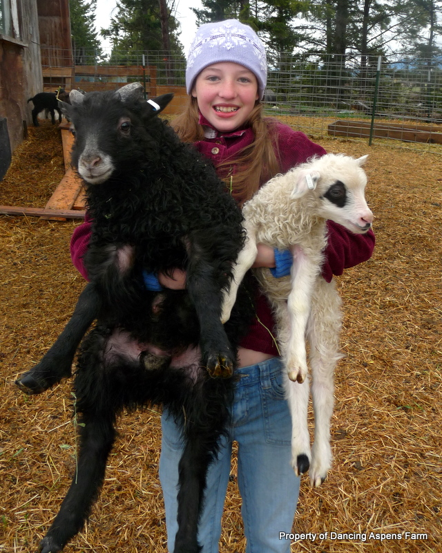 Black Licorice, one of our first born lambs vs. Blush, one of our last lambs...