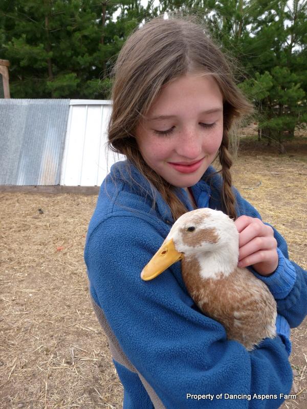 Tori's Indian Runner Duck...