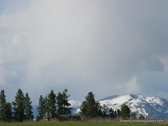 Big Mountain...