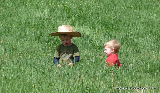 Brothers sitting in the pasture...