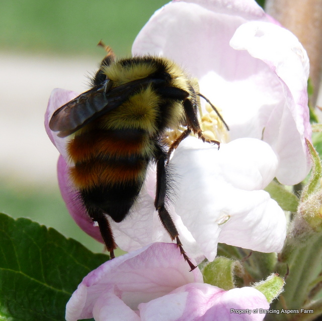 A big bumble bee...