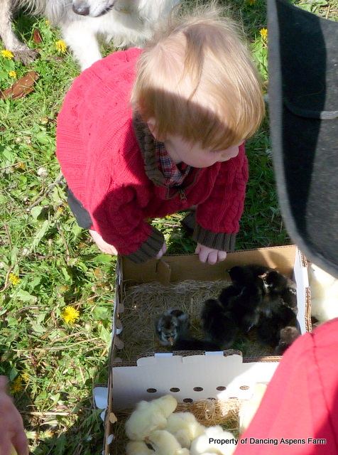 Zayne was very excited to see all the little peepers...