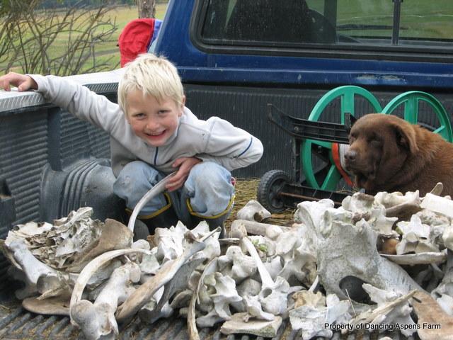 Garrett's Bone Collection...