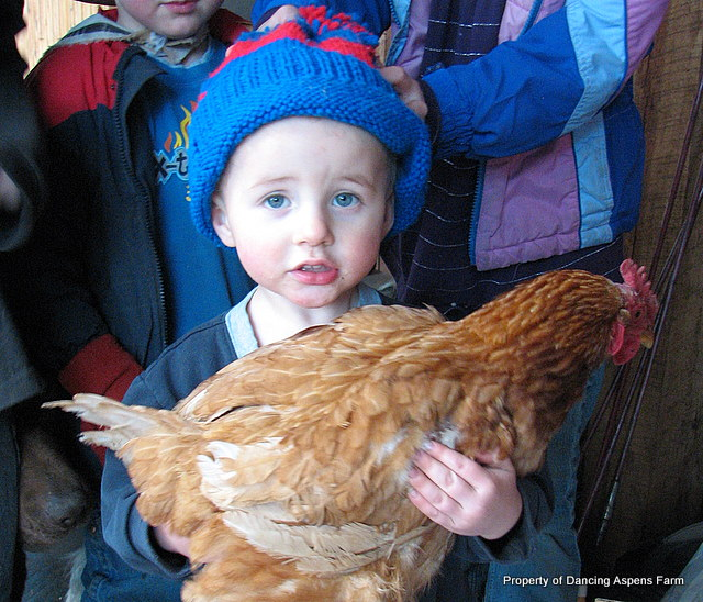 Showing an early love for chickens...