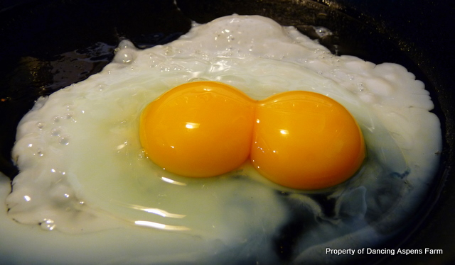 A yummy double yolker!