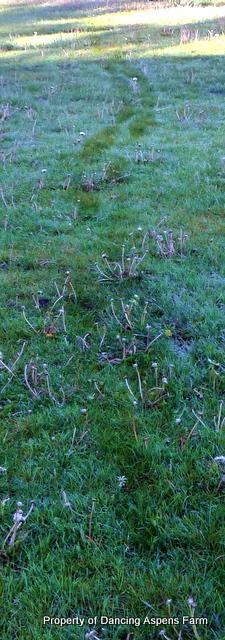 A frosty trail...