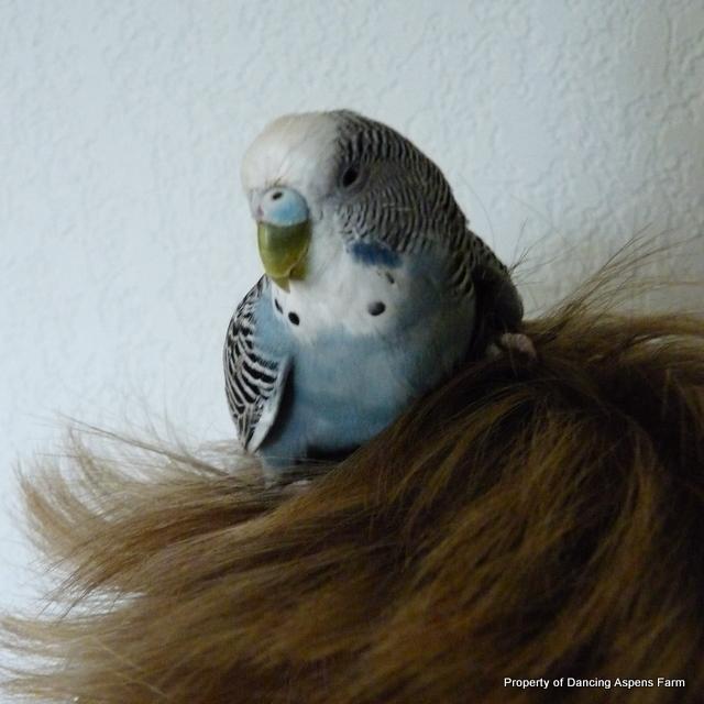 A nice parakeet nest?