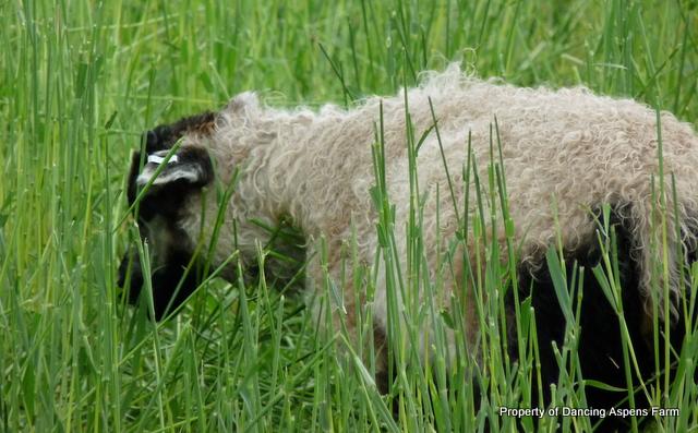 Badger eatin' away...
