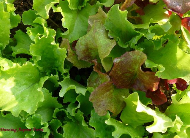 ...we found beauty in lettuce.