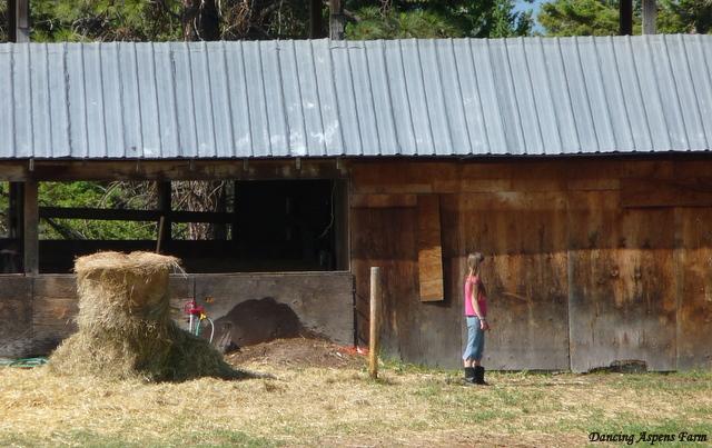 Tori up at the barn...