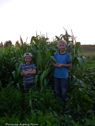 Garrett and Hayden in the corn...