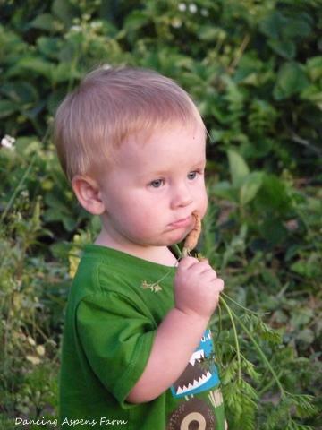 Zayne enjoying a carrot too...
