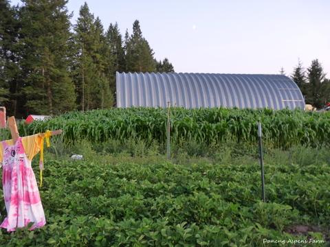 We should have a bumper crop of corn too!