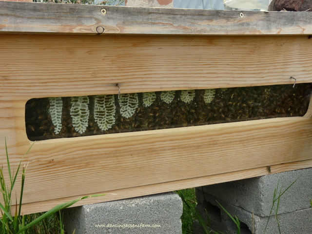 Our top bar hive is nearly full!