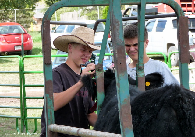 Sawyer's friend showing him how to fit his steer...