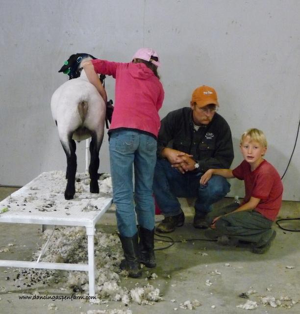Slick shearing....
