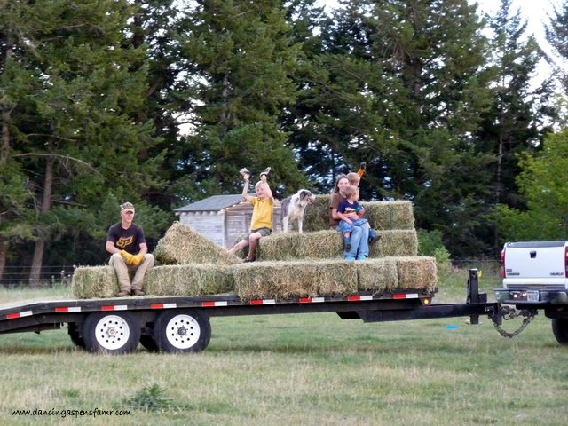 What would haying be without a little hay ride?