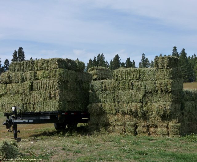 Stack of hay...
