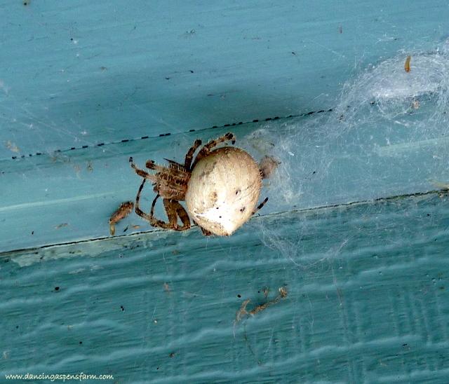 One big spider...