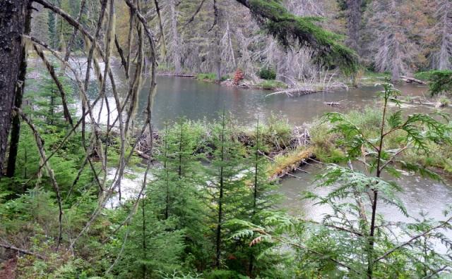 Beaver Dam...