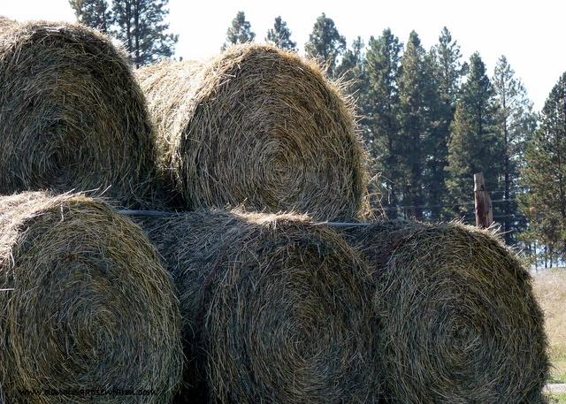 More Hay...