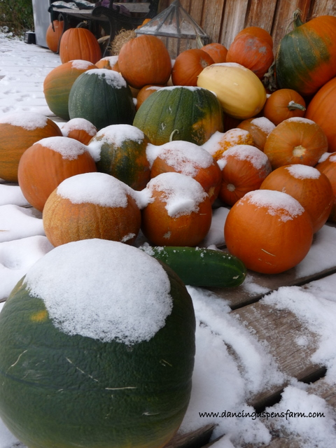 Pumpkins on the porch with snow...