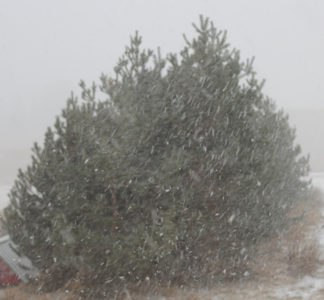 Snow coming down...